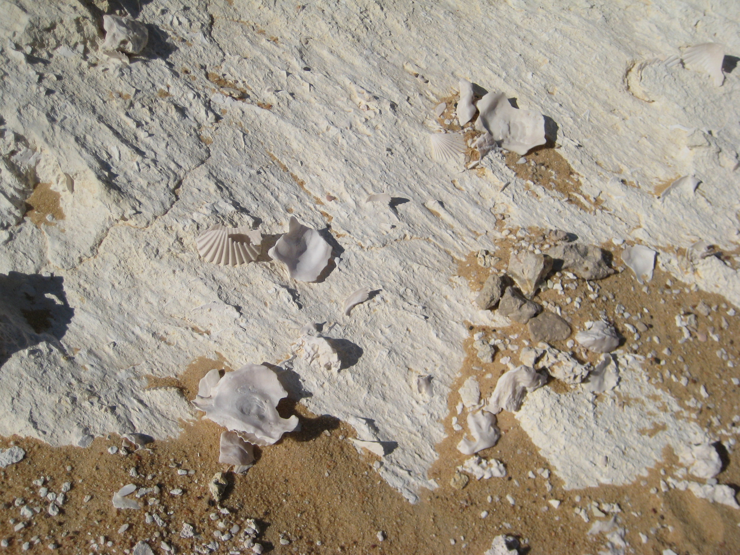 seashells in the desert, siwa