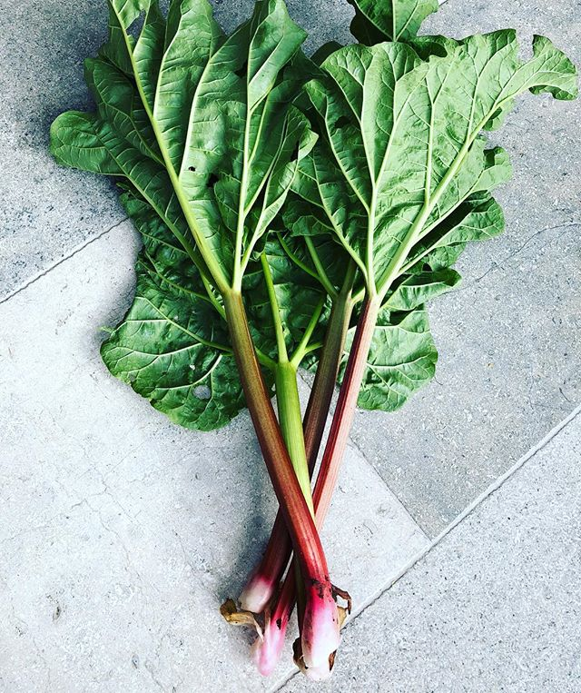 First picking from the allotment, yay! #allotmentlife #allotment #organicgardening #vegan #rhubarb #rhubarbcake