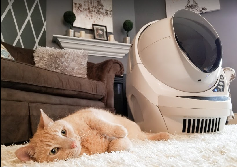 Five minutes after the Litter-Robot reveal and Apollo was already making himself comfortable around it.