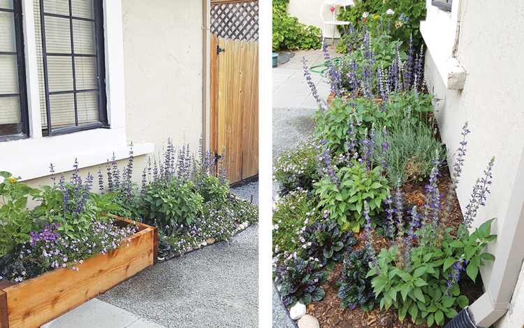 PLANTS  From the other angle, you see mostly calming purples. Sage, ajuga, and verbena are placed underneath in a window box to provide eye appeal.