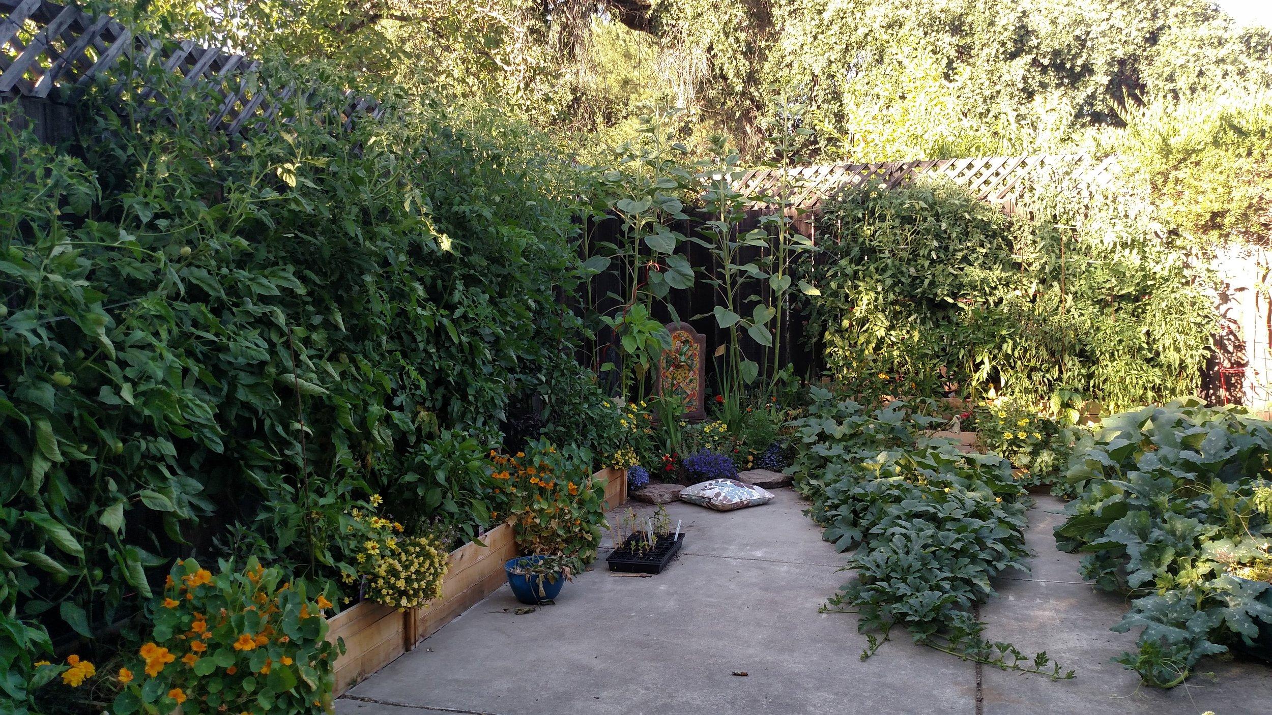 Tomato.Trellis.Jungle.Organic.Garden