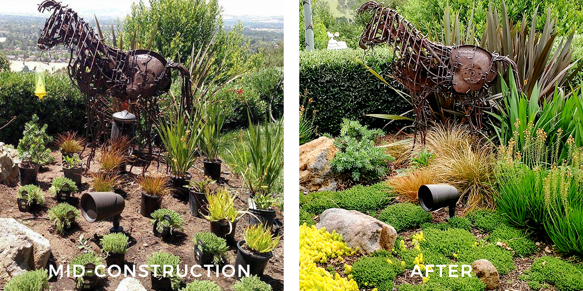 PASTURES OF TIME  Envisioning a landscape design when fully grown in takes a unique leap of faith for both designer and client! Here is an excellent example of what one year in the life of a planted bed reveals. The lush grasses are starting to catch the wind. The bulbs are blooming profusely while filling in the mid-level niche. The sedum carpet is almost inching its way to total coverage. What started as a vision has grown into a fused design.