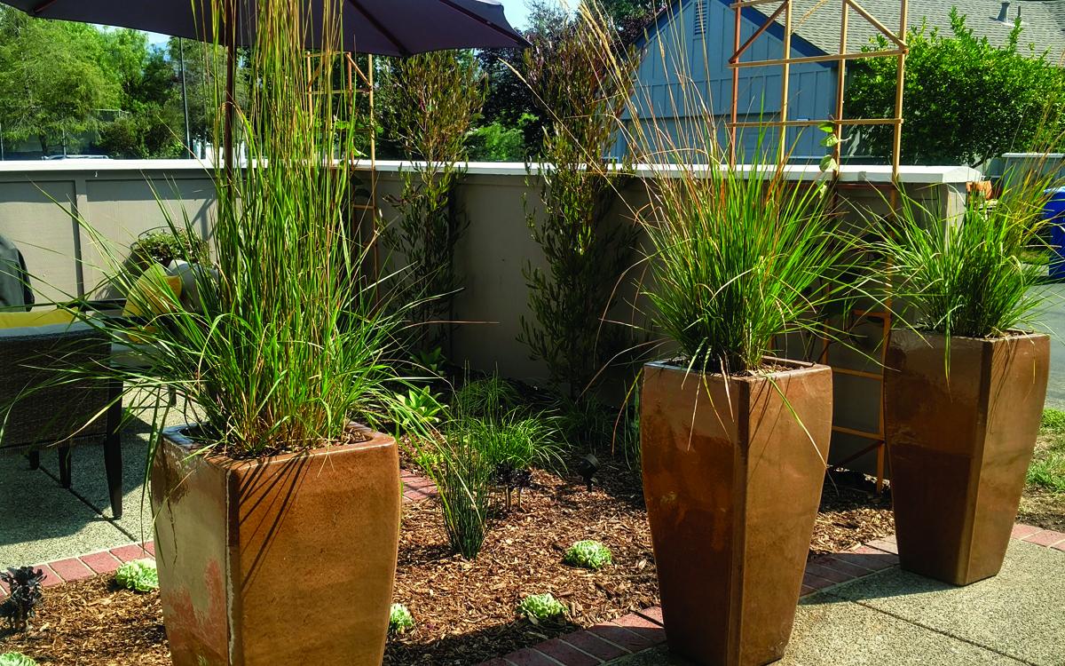 shades-of-green_succulent-grasses.jpg