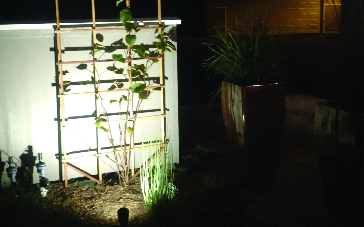 UpLIGHTING  Extending the landscape into the evening is a rare treat. Uplights dramatically light up the kiwi vines and Chondropetalum. Softer path lights allow for outdoor enteraining and easy navigation after the sun goes down.