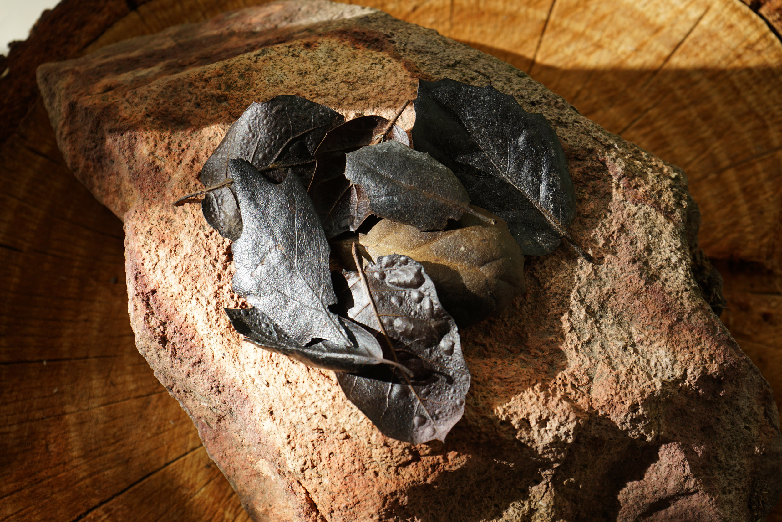 burnt.oak.leaves_sonoma.fires.jpg