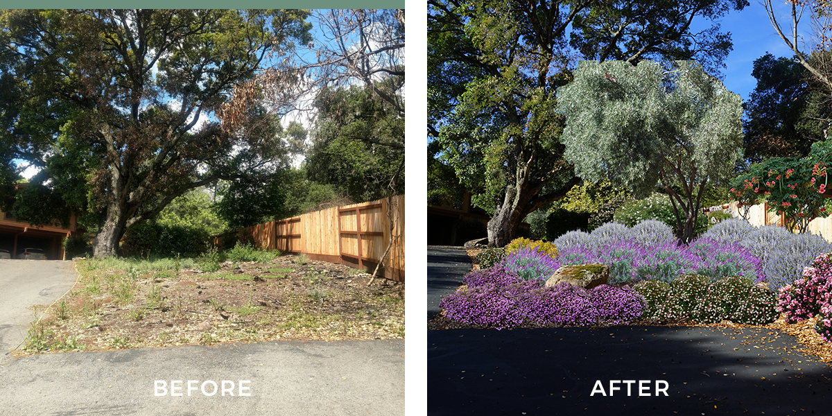 NIGHT AND DAY  Transitioning from the blank slate left after the October 2017 wild fires burned through the property was a process. We used the existing plant palette that had survived and added to it. The final design is a soft welcoming glow of lavender blooms and warm orange trumpet vines.