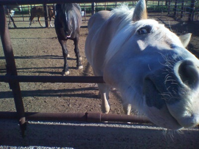 Animal-Assisted Psychotherapy - Equine- and Animal-Assisted Psychotherapy can be a wonderful alternative to the traditional four-wall therapy sessions.