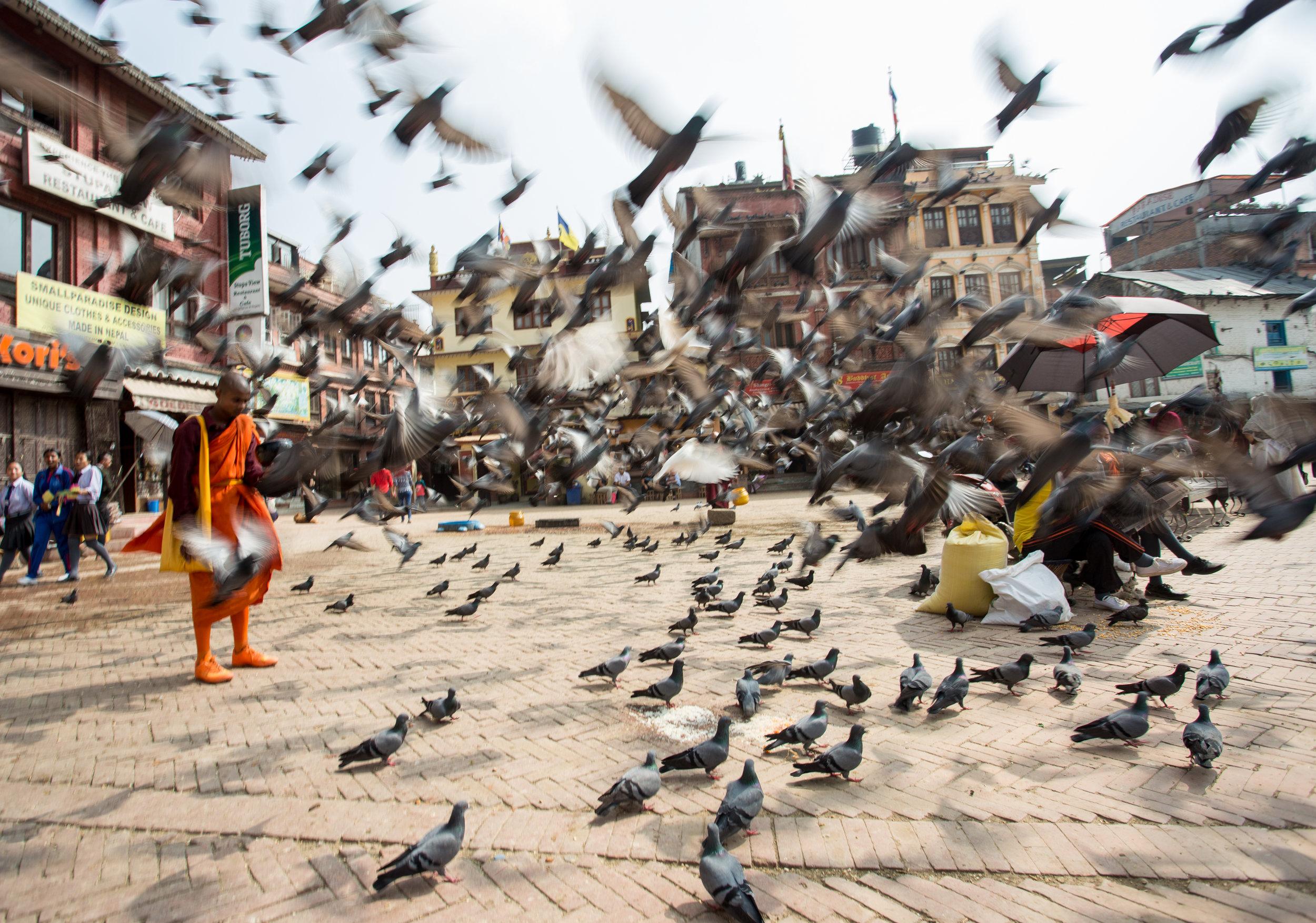 Monk feeding pigeons in Kathmandu