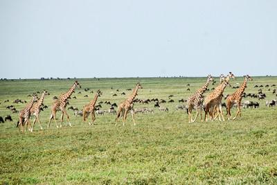 Tanzania-9.jpg