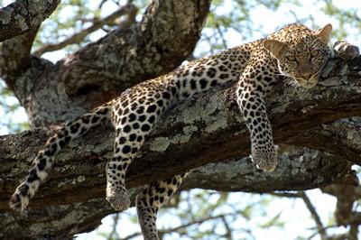 Tanzania-10.jpg