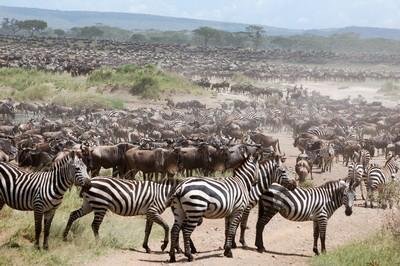 Tanzania-12.jpg