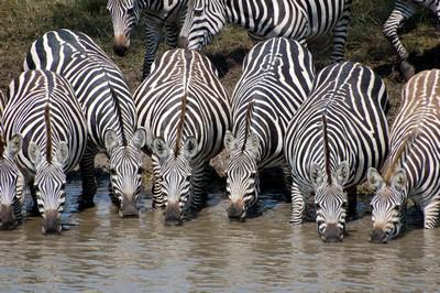 Tanzania-15.jpg