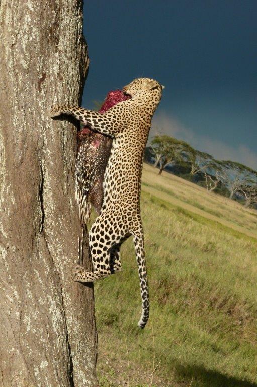 Tanzania-48.jpg