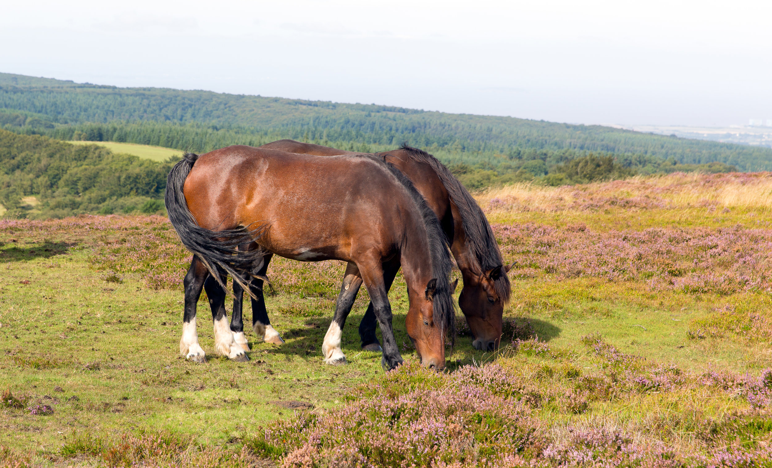 MC-03292016-animals-Quantocks-ponies-9.jpg