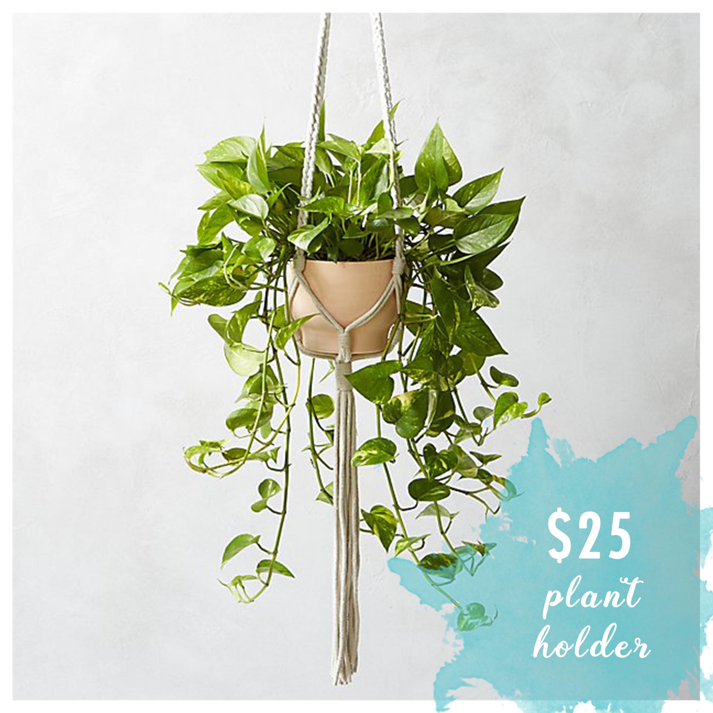 lb plant holder.png
