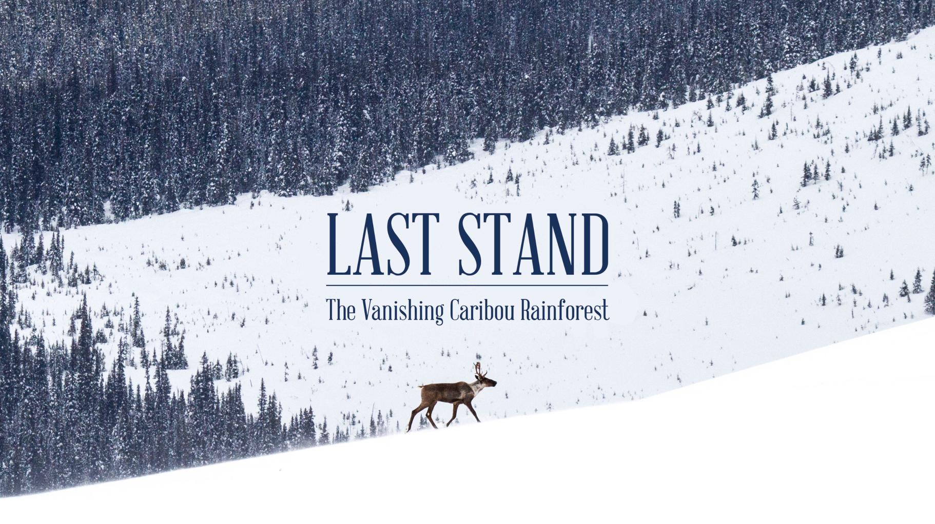 FULL FILM NOW AVAILABLE ON DEMAND - Last Stand: The Vanishing Caribou Rainforest