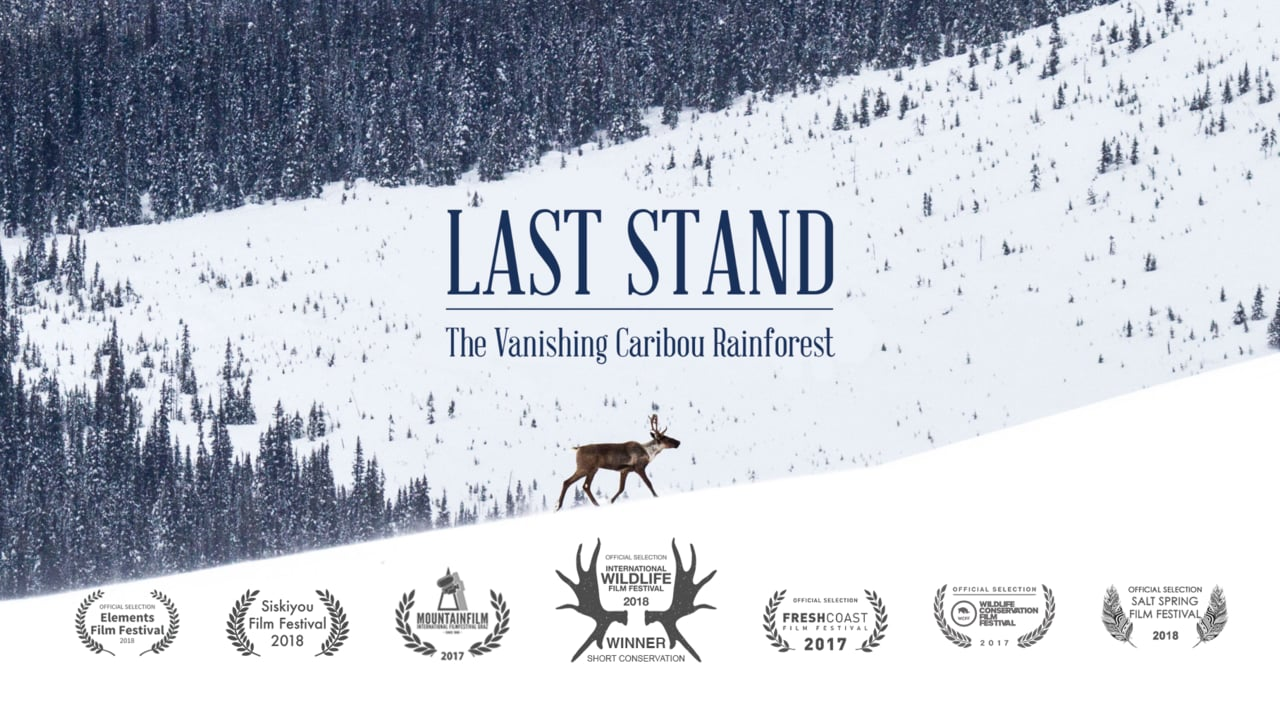 "Watch The Movie - Hidden in the interior of the Pacific Northwest is the largest remaining inland temperate rainforest on earth. This magnificent landscape is home to numerous First Nations communities, thousand year old trees and critical habitat for endangered species like mountain caribou. However, industrial development has pushed this ecosystem to the tipping point. The 34 minute documentary ""Last Stand"" puts the Caribou Rainforest on the map before it's too late.More information →"