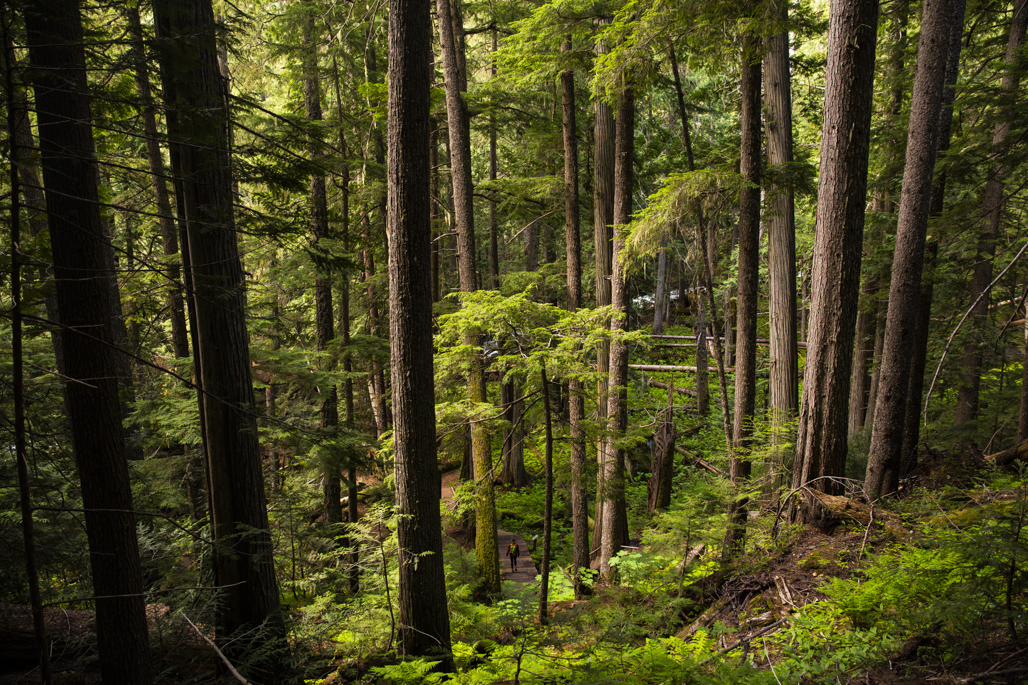 Protect the Rainforest - The Caribou Rainforest is the last remaining inland temperate rainforest on planet Earth. British Columbia plans to continue to log old growth rainforest for the next 30-40 years. Take Action: Ancient Forest Alliance→Take Action: West Kootenay's Ecosociety →