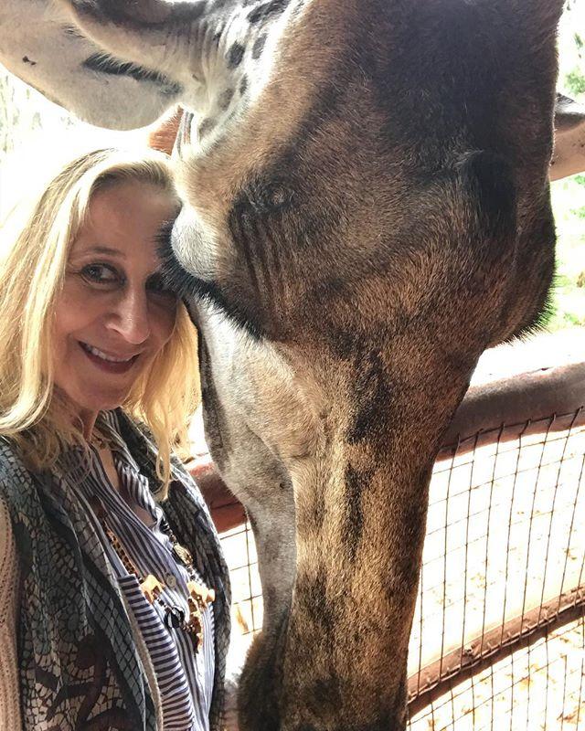 First stop Giraffe Center. Through their work, Rothschild giraffe population has grown from 150 to over 1000! #selfie #lovegiraffes #kenya #outofafrica #micatosafaris