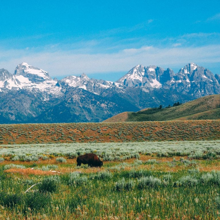 Jackson Hole & Grand Teton National Park: Eat, Sleep, Explore - HATCHFLY: If you're looking for the perfect destination to experience the American West, look no further than Teton County, Wyoming, and book your flight to Jackson Hole.(4 December 2017)