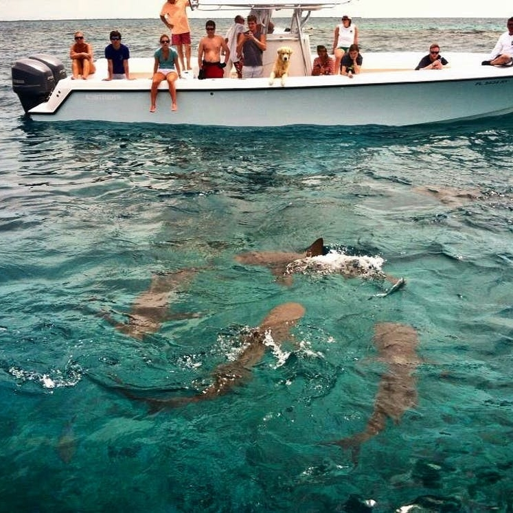 What Swimming with Reef Sharks in the Bahamas Taught Me About Confidence - BRIT + CO: I inhaled into my snorkel and adjusted my mask to get a clearer look at the six-foot reef shark swimming straight toward me below the surface of the water.(28 July 2018)