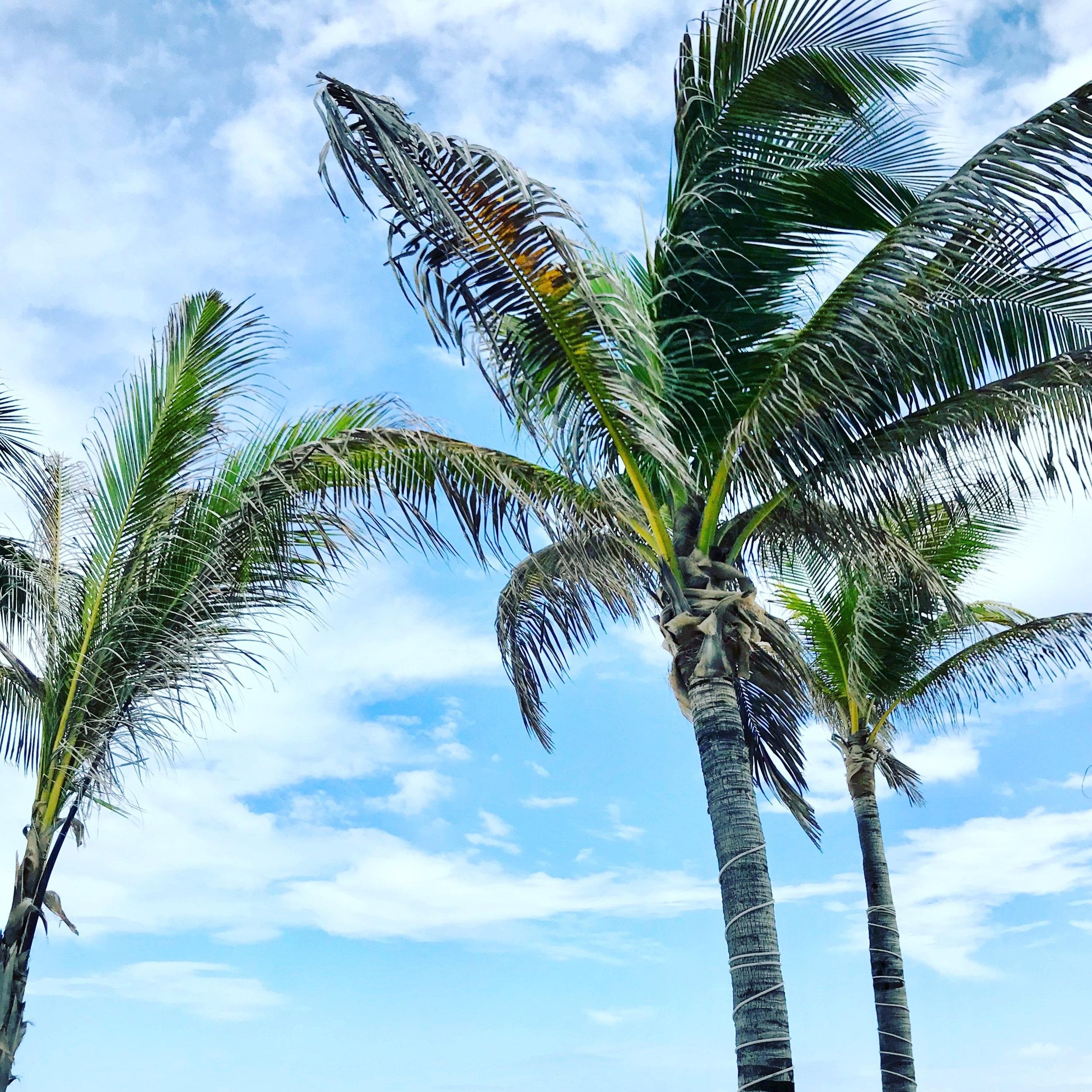 playa del carmen -