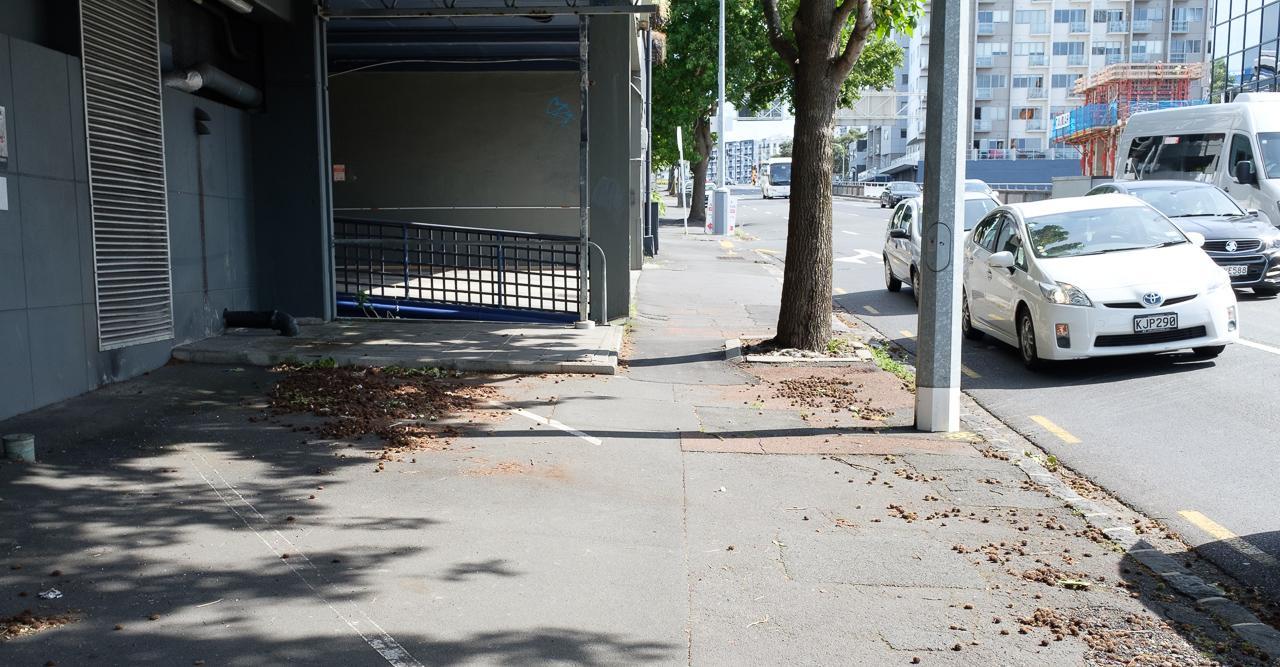 nelson-street-photos.jpg