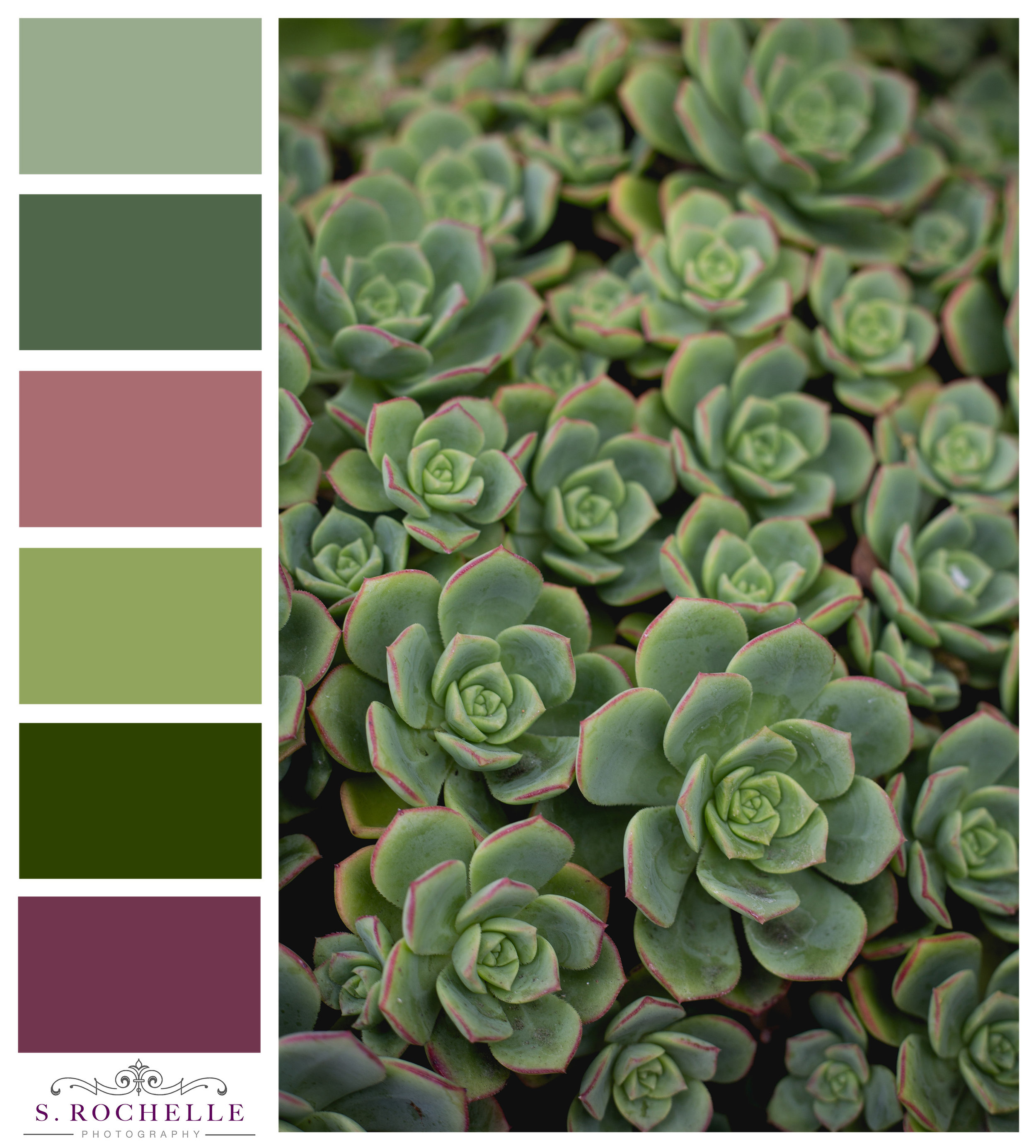Succulent Detail S Rochelle Photography IMG_9111_ColorPalatte.jpg