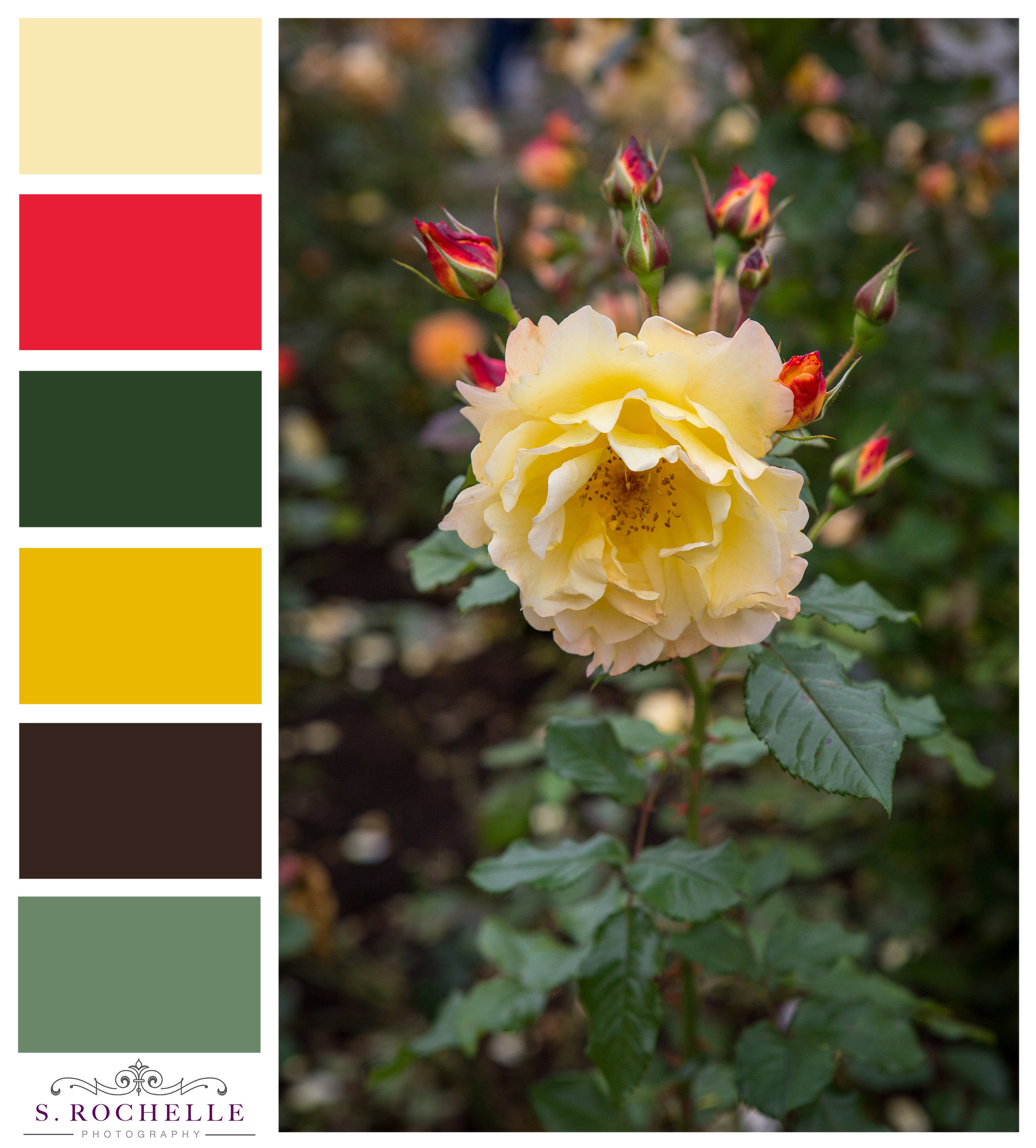 Yellow Rose_S_Rochelle_Photography_20170924_IMG_1766_ColorPalatte.jpg