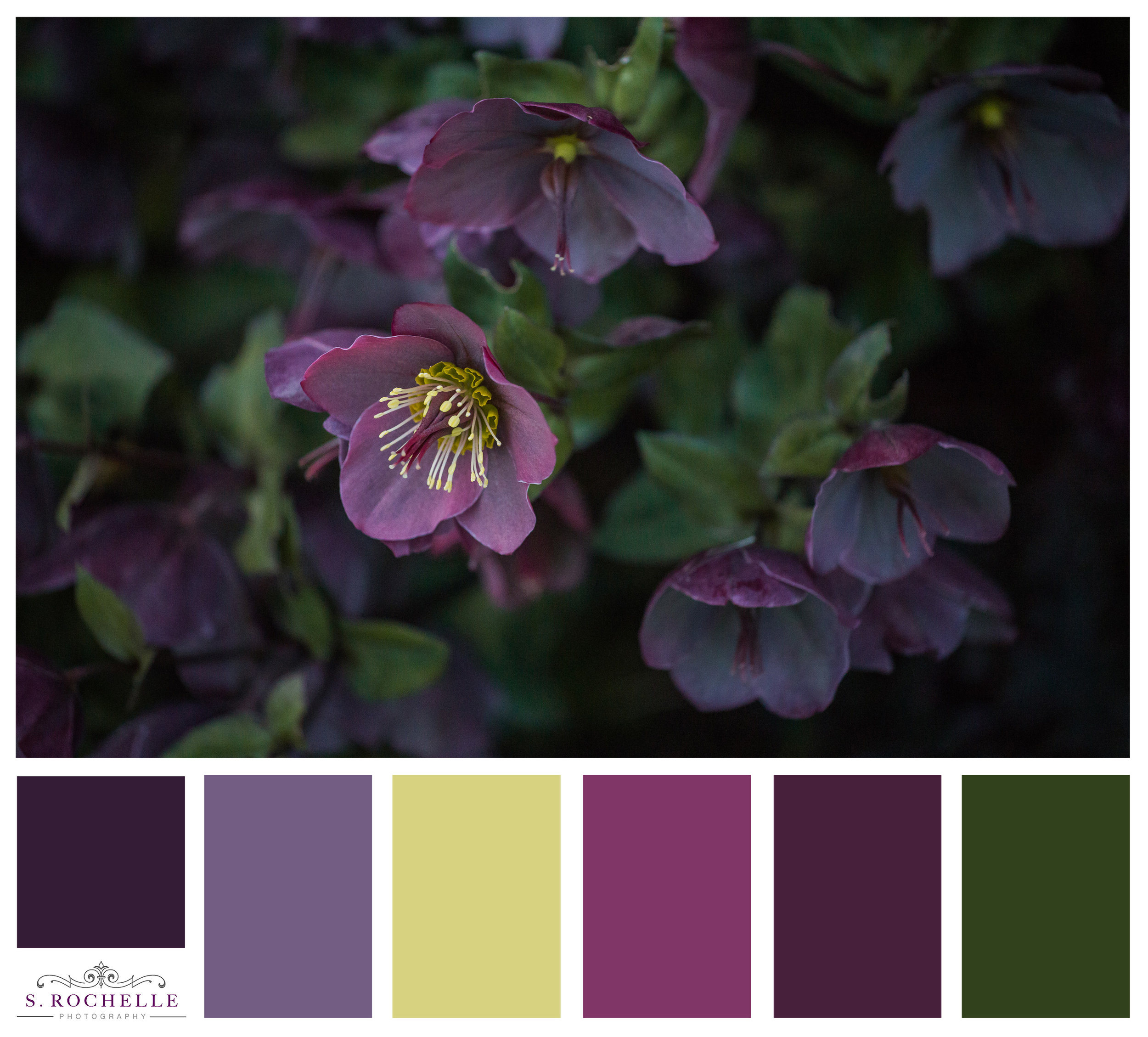 Hellebore_S_Rochelle_Photography_20170503_IMG_9544_ColorPalatte.jpg