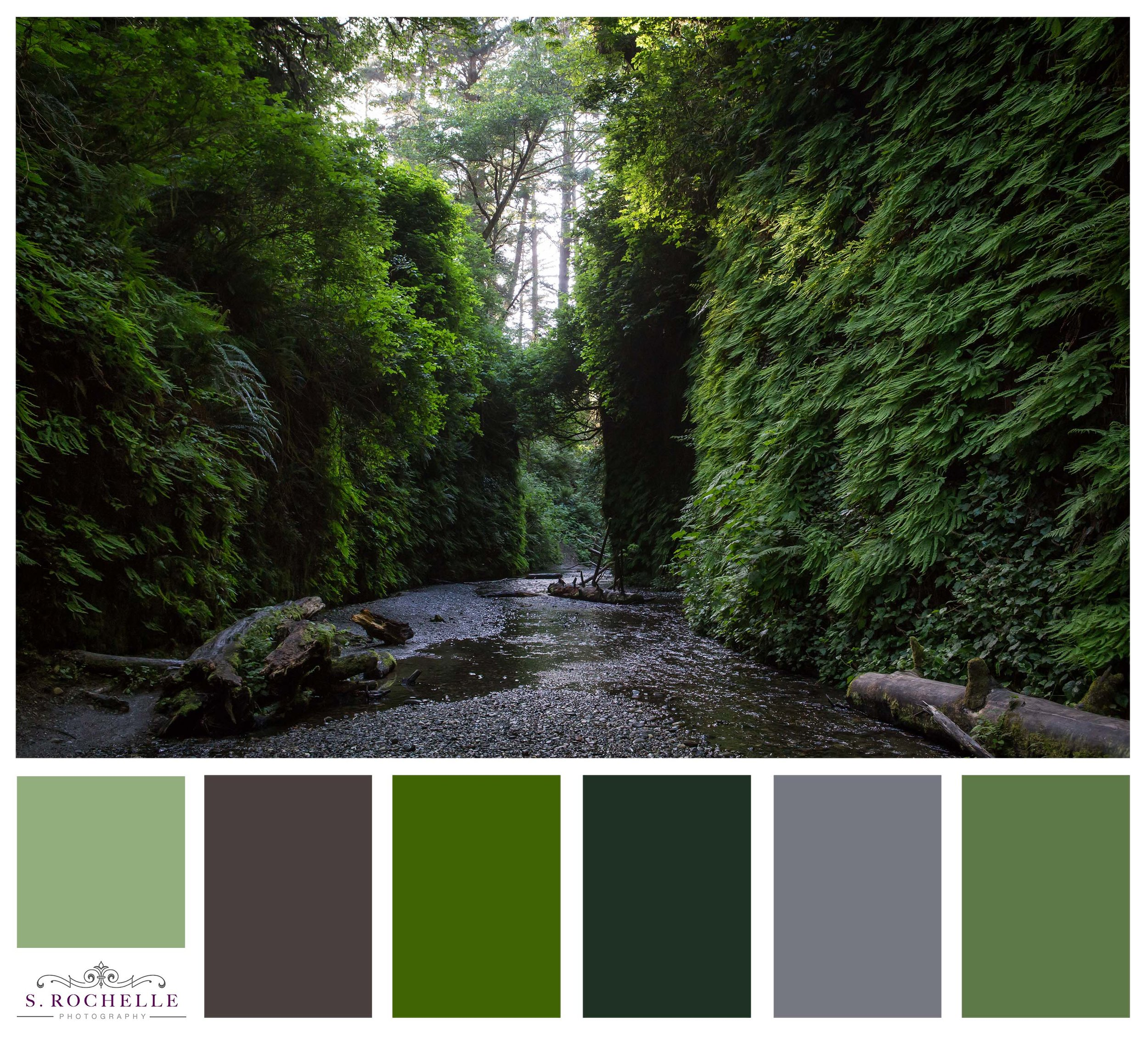 Fern_Canyon_S_Rochelle_Photography_20180527_IMG_9076_ColorPalette.jpg