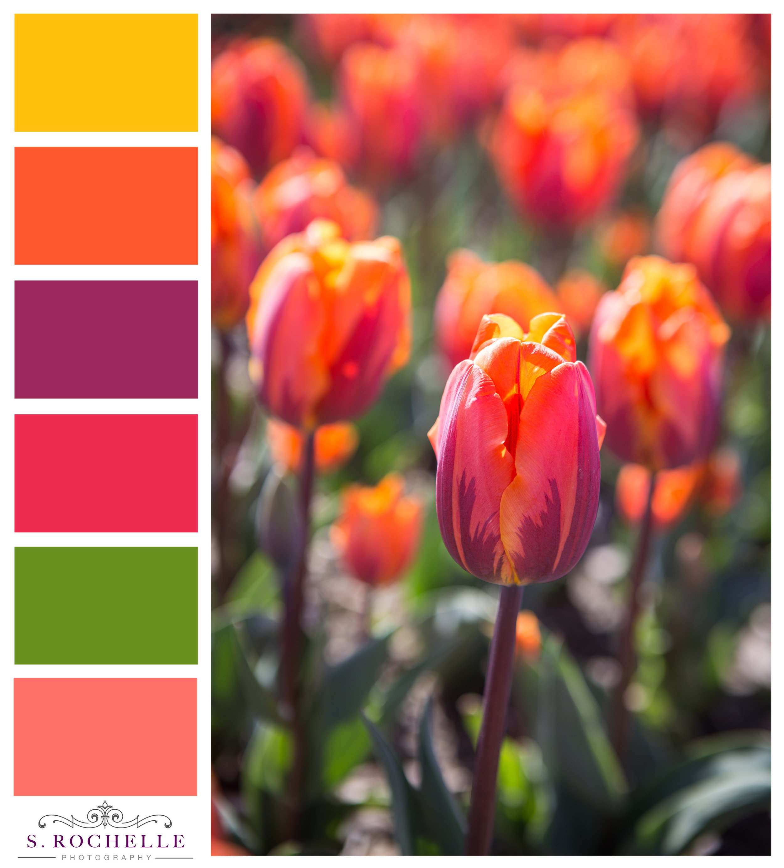 Princess_Irene_Tulips_S_Rochelle_Photography_20180422_IMG_9830_ColorPalette.jpg