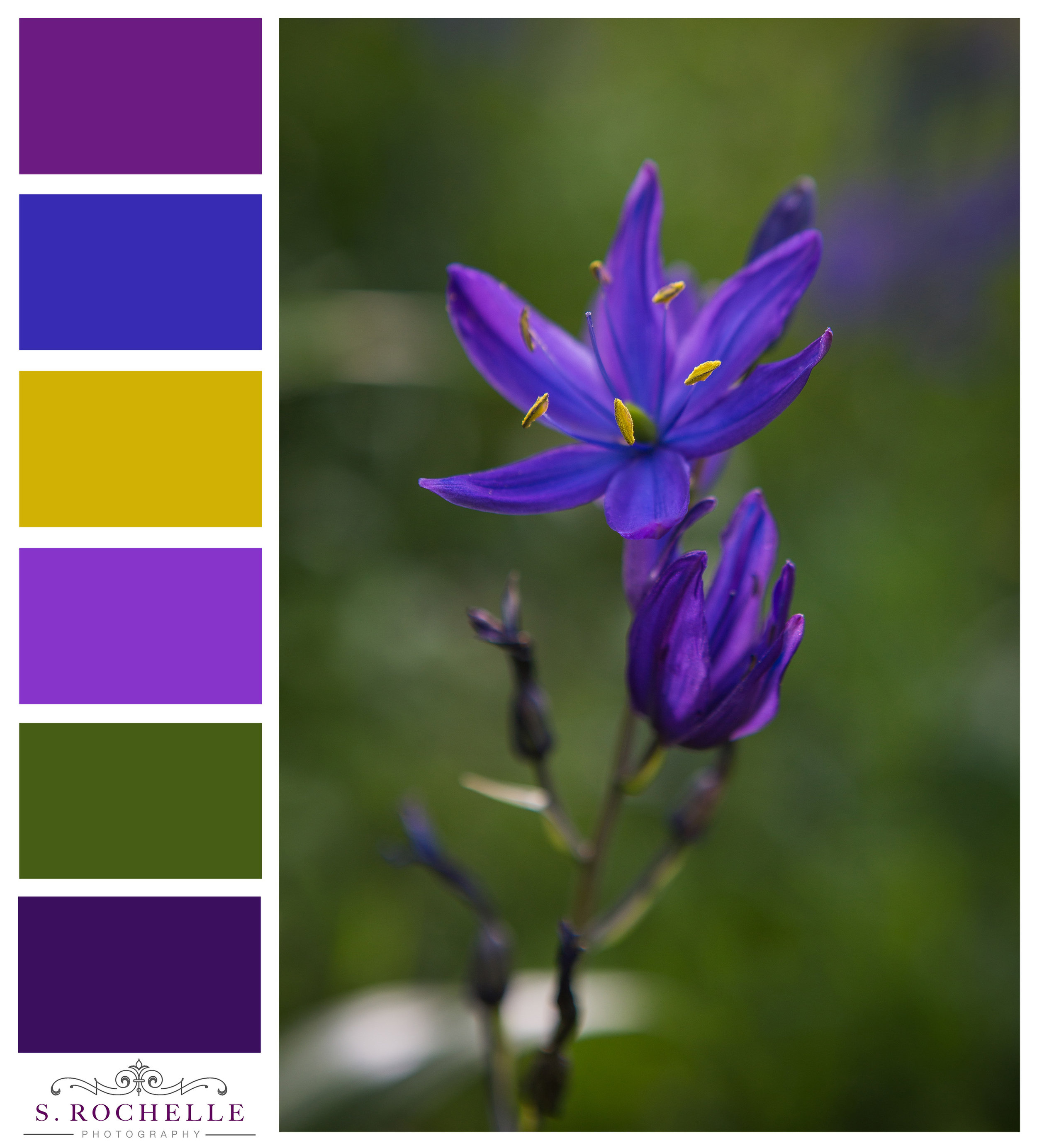 Camas_Lily_S_Rochelle_Photography_20180504_IMG_1656_ColorPalette.jpg