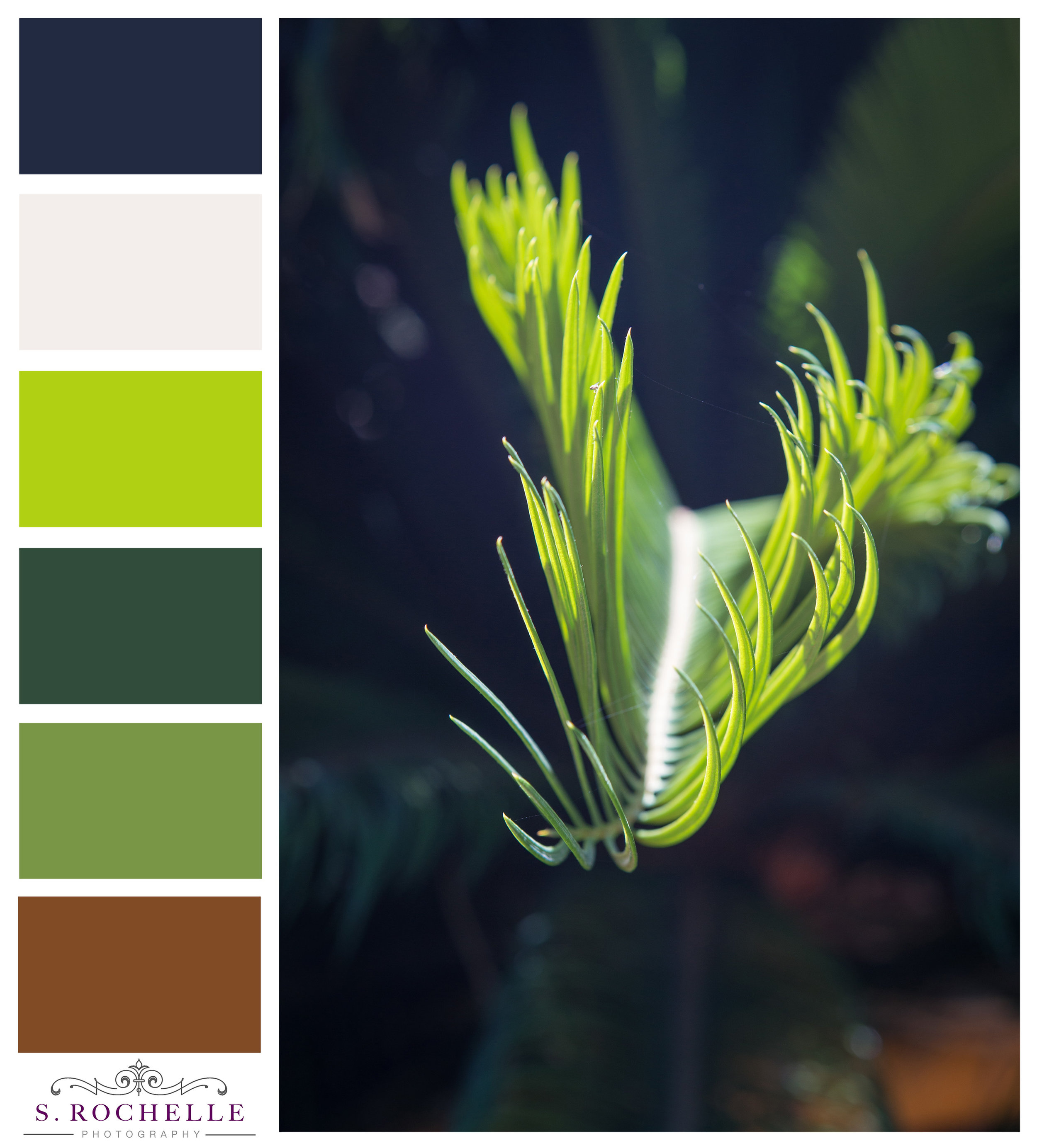 Sunlit_Greenery_S_Rochelle_Photography_20150829_IMG_1950_ColorPalette.jpg