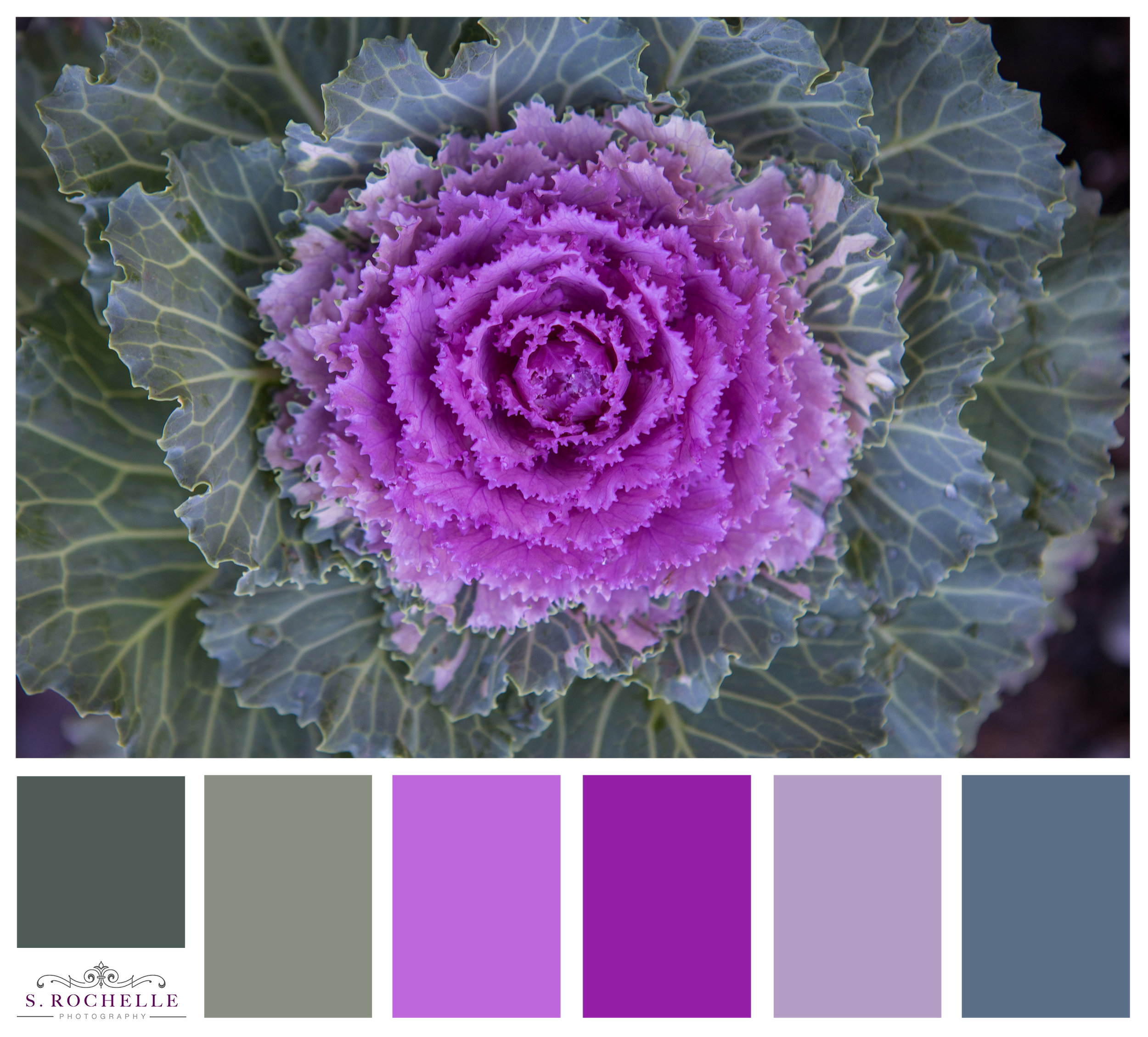 Ornamental_Cabbage_S_Rochelle_Photography_20171205_IMG_2282_ColorPalette.jpg