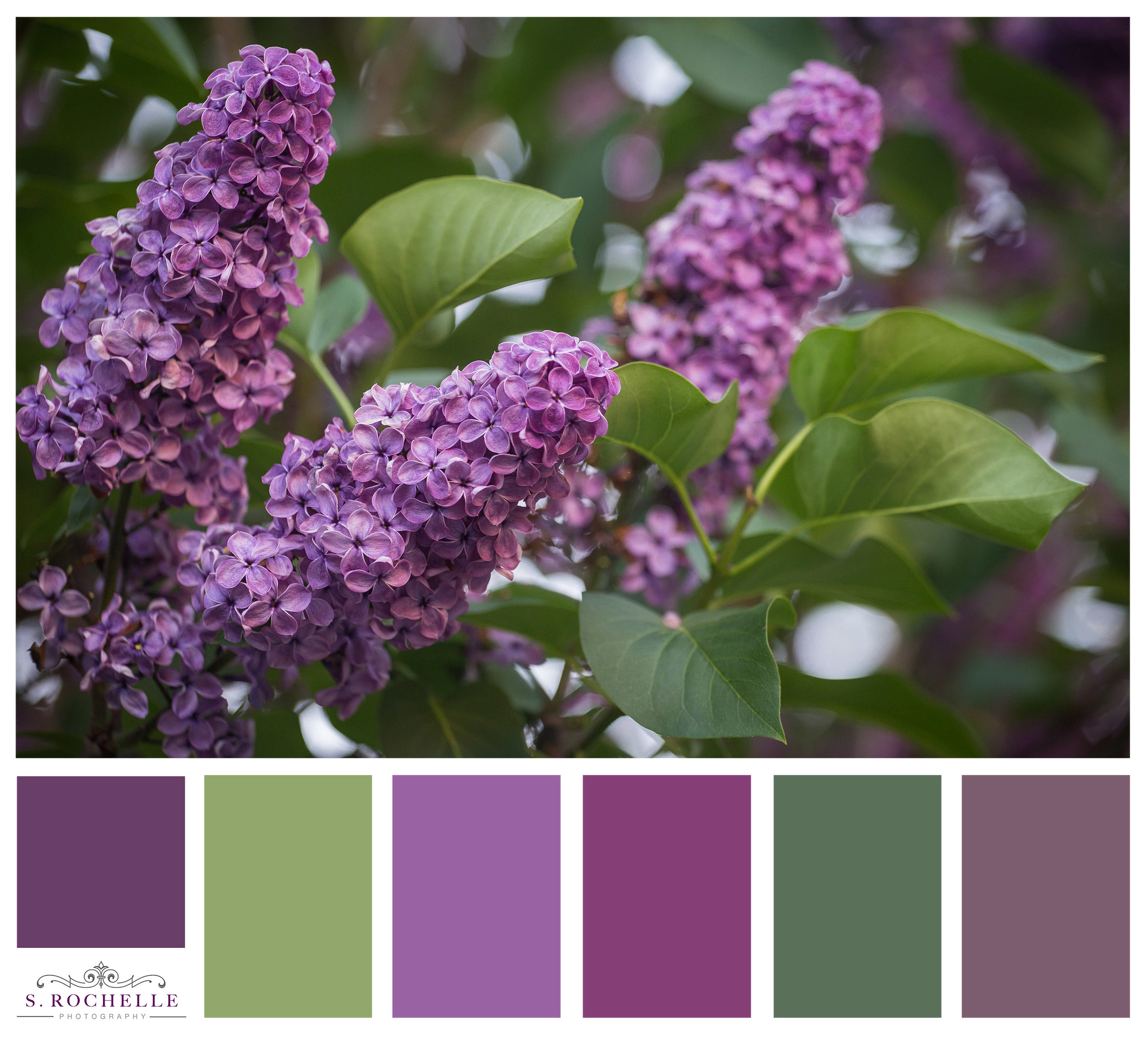 Lilacs_S_Rochelle_Photography_20180515_IMG_7015_ColorPalette.jpg