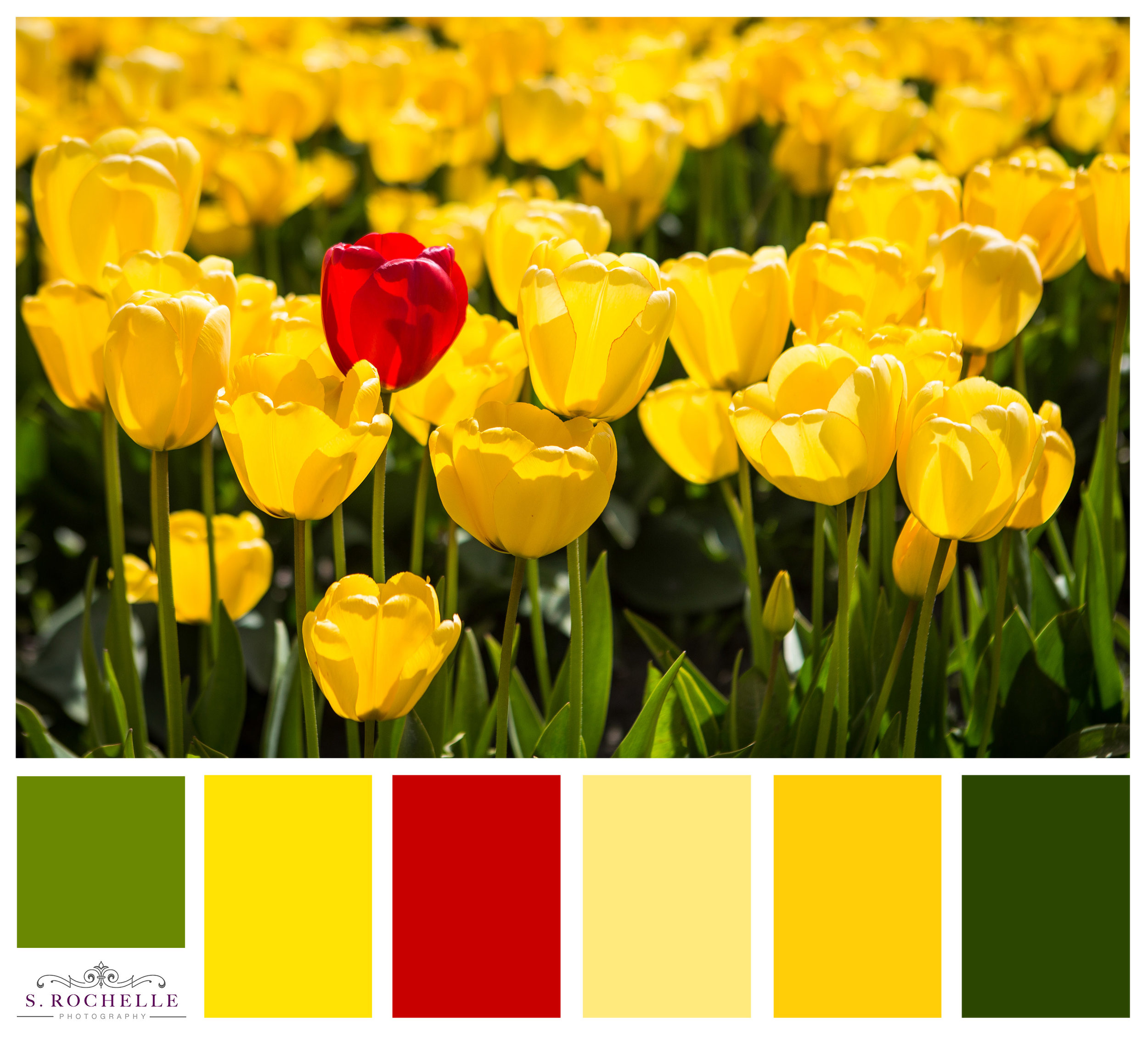 Tulips_S_Rochelle_Photography_20180422_IMG_0197_ColorPalette.jpg