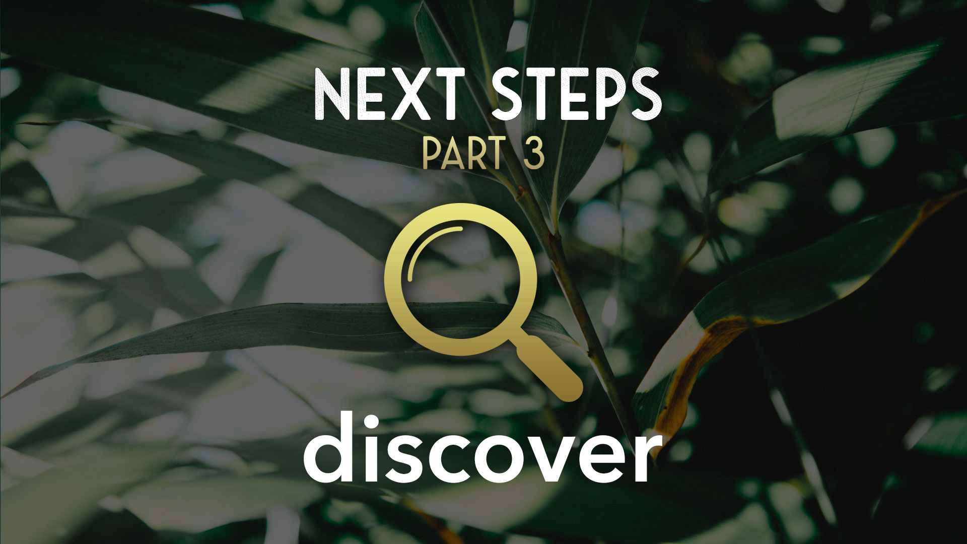 Next-Steps-Part-3