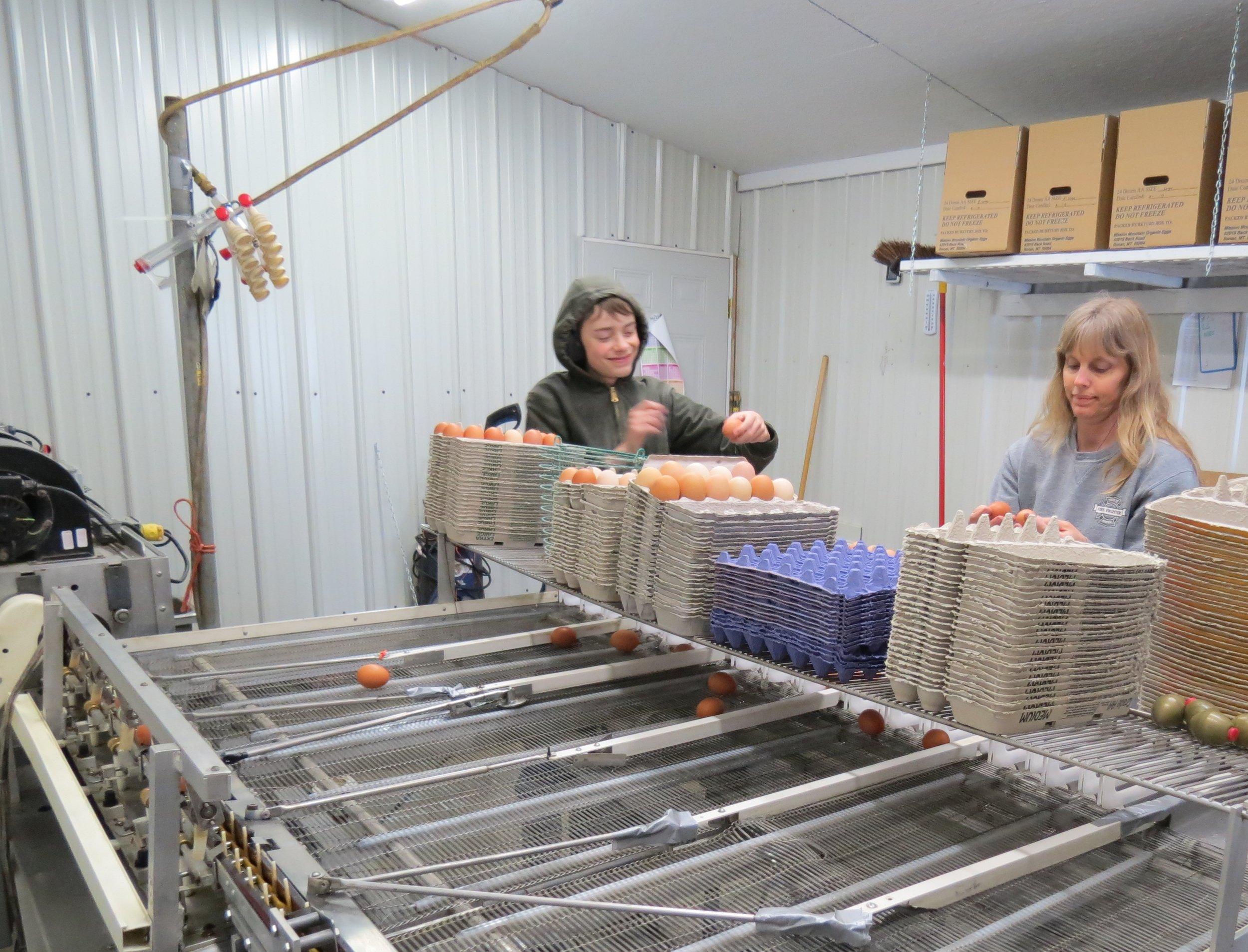 Processing Eggs