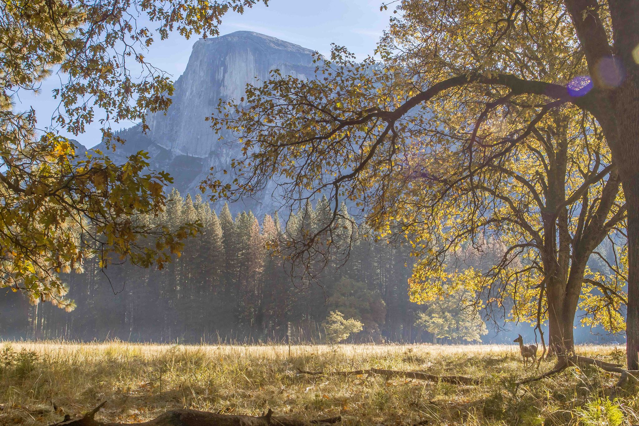 yosemite-fall-deer-kim-lawson.jpg