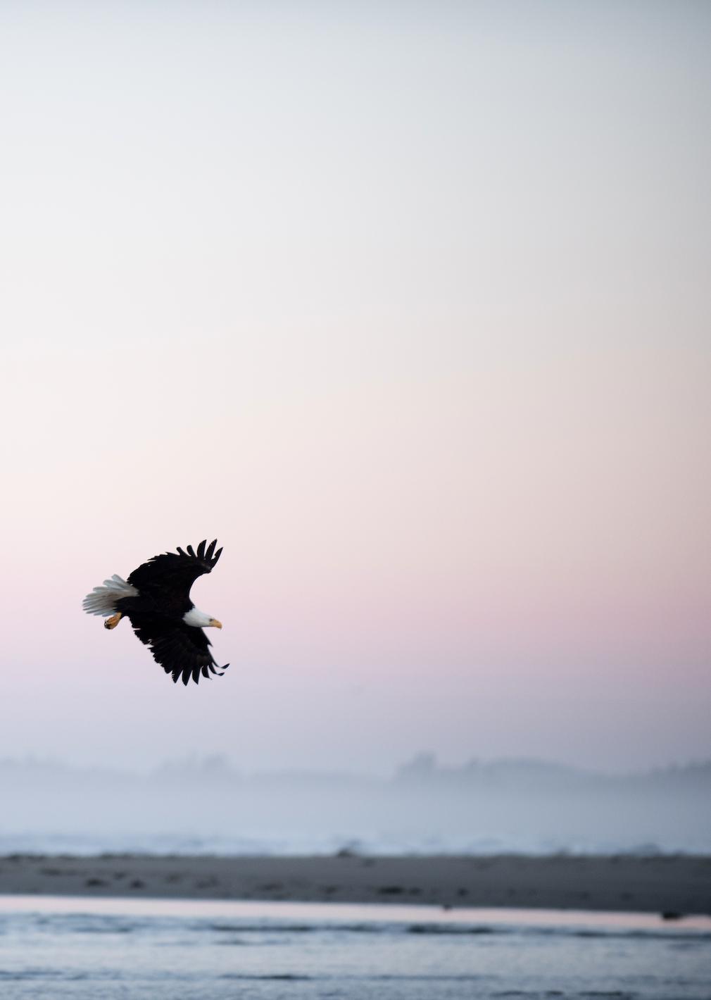 Eagle May 2019