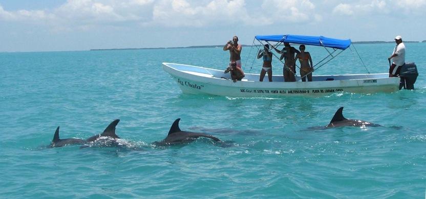 siaan kan delfin.JPG