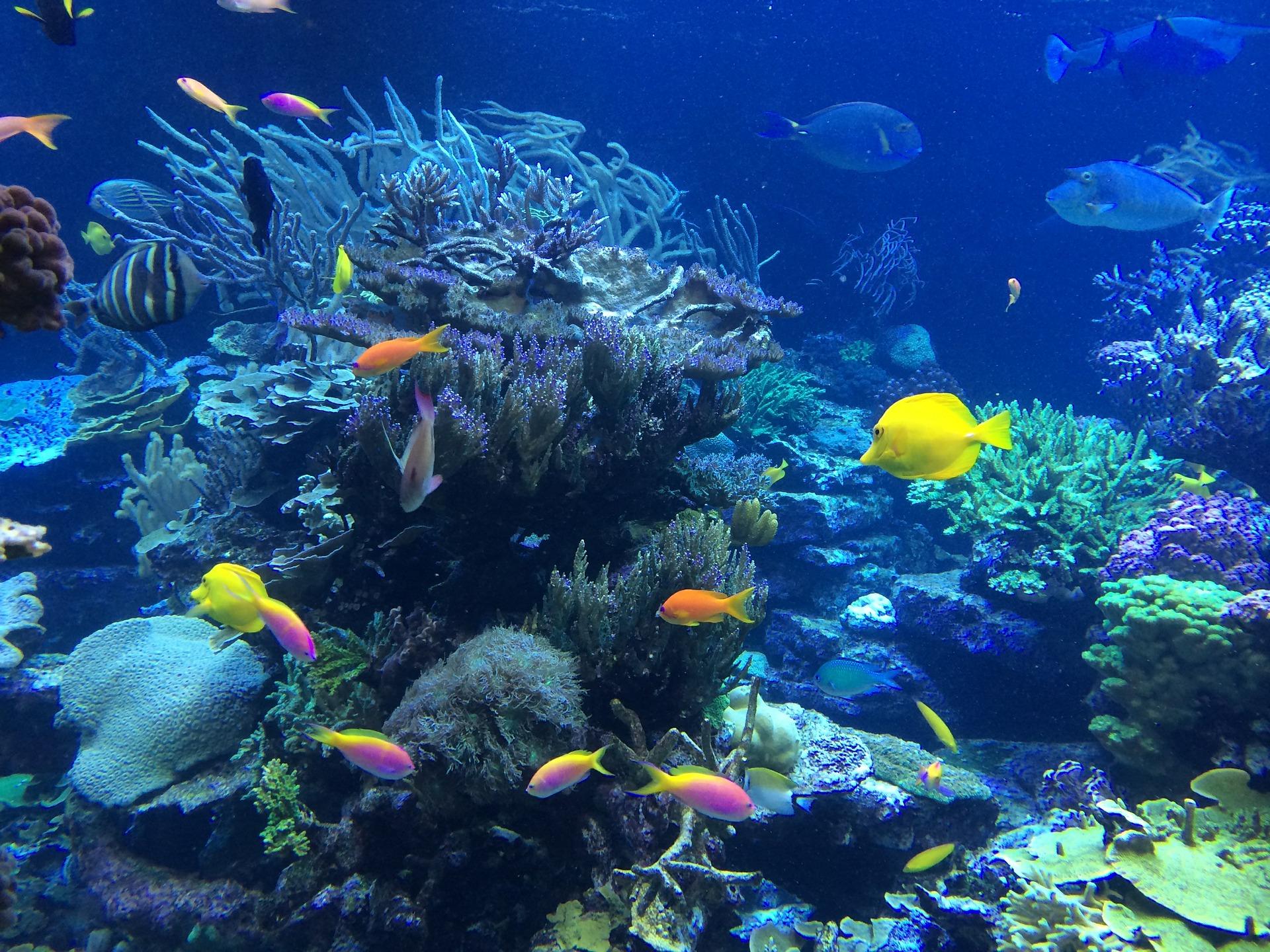 underwater-408904_1920.jpg