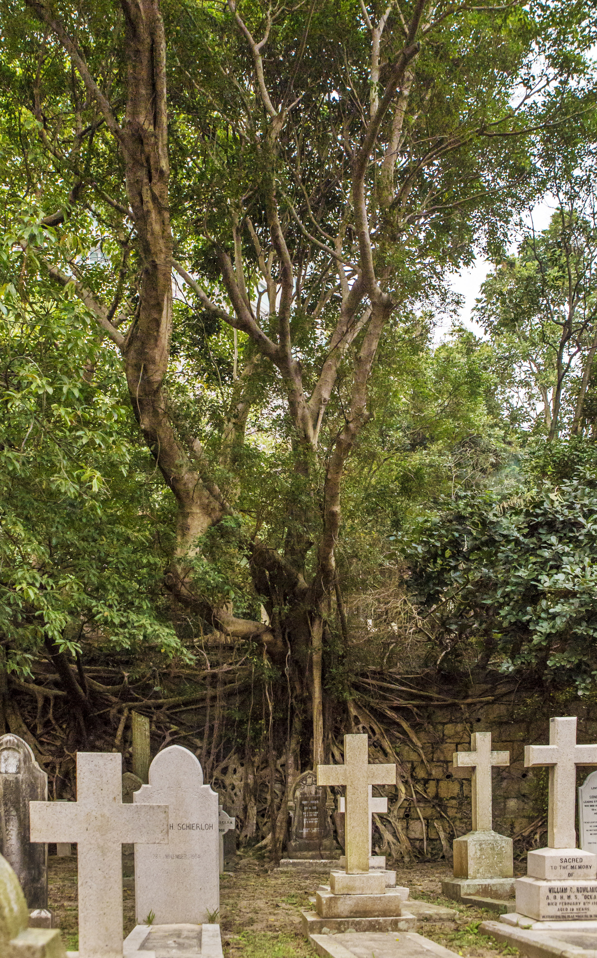 Hong_Kong_Cemetery_trees_and_gravestones