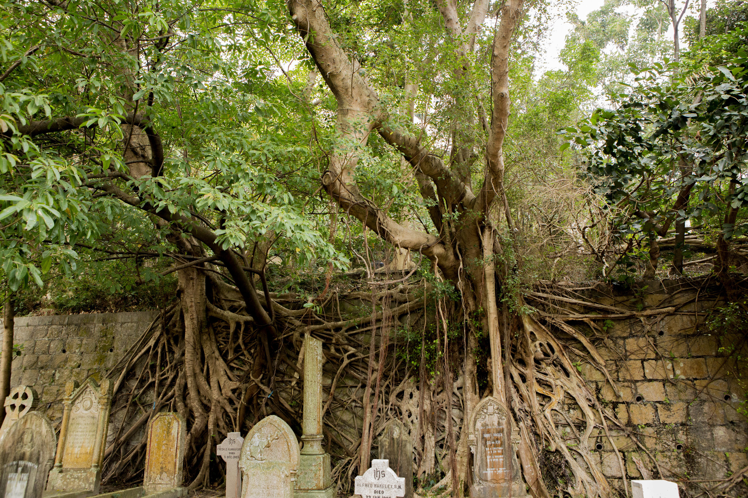 HK Cemetery.jpg
