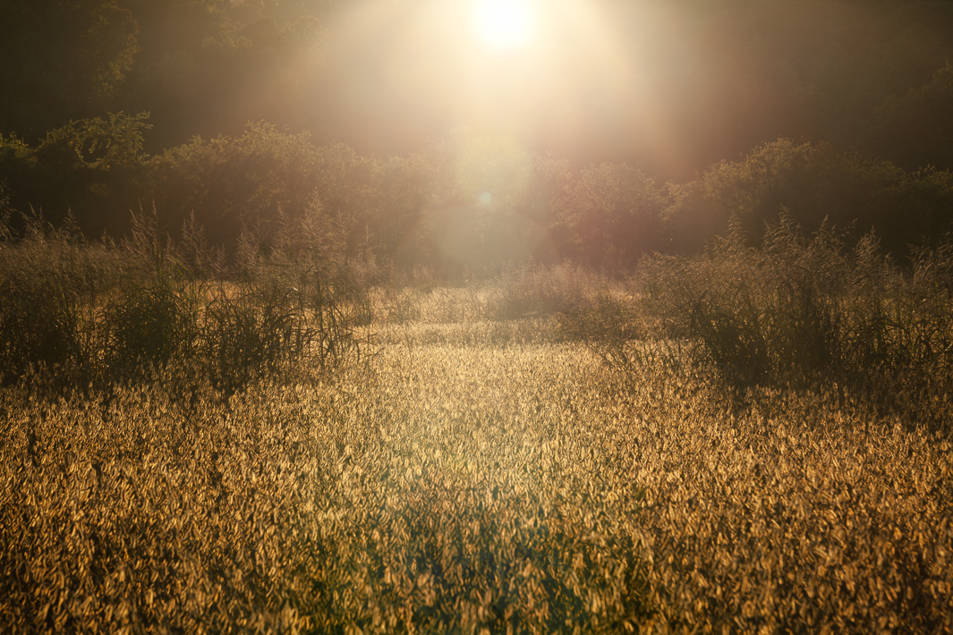 """Fields of Gold"""