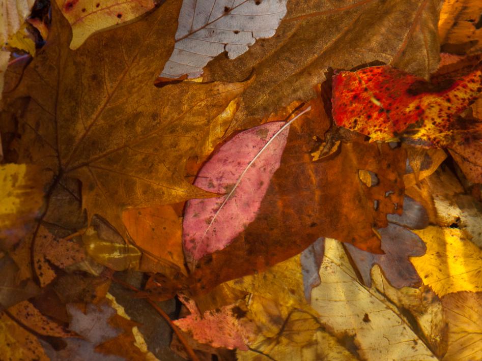 """""""Underwater Autumn"""""""