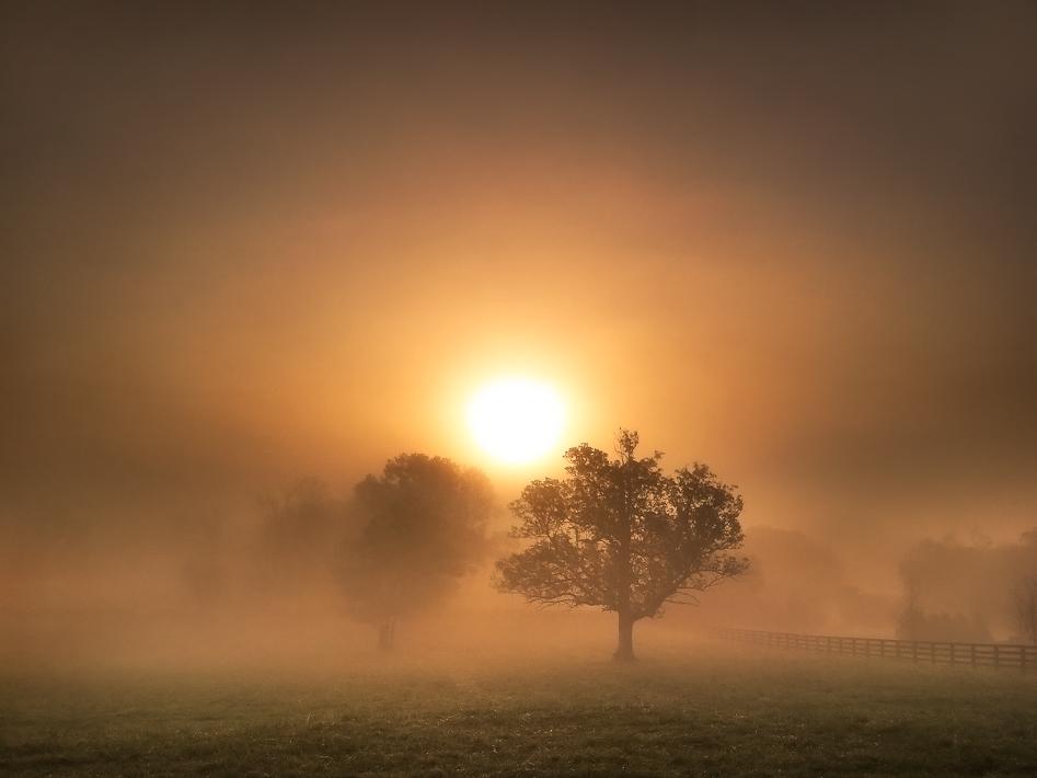 """""""Morning Joy"""""""