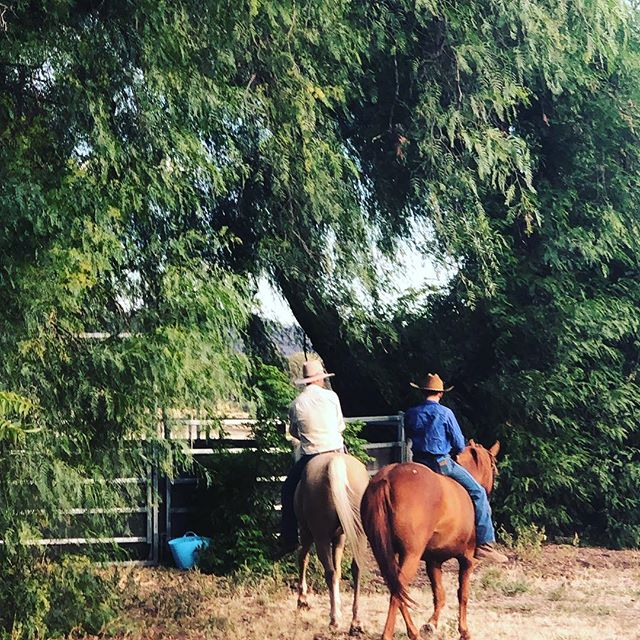 • BAREBACK BOY • When child number 2 comes home from boarding school for the first time and this is all he wants to do (right after he took his kelpie Flash for a run) #ringer #barebackriding #farmkid #fatherandson