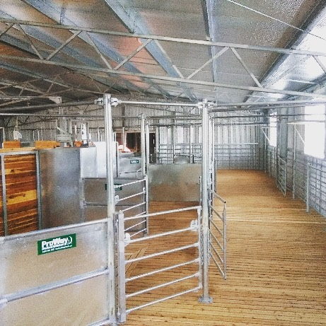 • OPEN DAY TOMORROW • The 2nd annual Twelve Mile Stud Tour is running again tomorrow. We look forward to welcoming you through the doors of our new woolshed from 10am. We will have the 100 strong Ram Sale Team as well as our Young Sires & Stud Ewes for your inspection. Morning tea & lunch on us. What more could you ask for in a day out? #merinowool #openday #farmgate #proway #mulesingfree #woolshed #ramsale